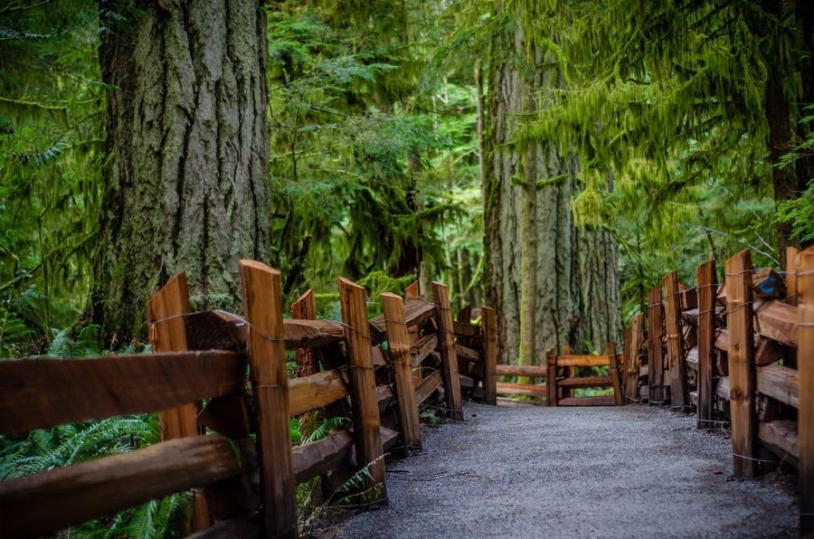 Cathedral Grove 900 Opt